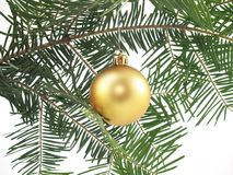 Christmas tree and bauble Royalty Free Stock Photos