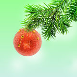 Christmas tree and bauble Stock Images