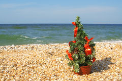 Christmas tree on the beach Stock Photography