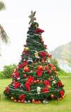 Christmas Tree On Beautiful Tropical Background Stock Image