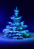 Christmas tree blue Stock Image