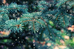 Christmas tree on blurred background. royalty free stock photo