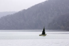 Christmas tree in a boat Stock Photography