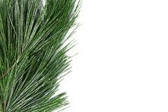Christmas tree border isolated on white background Stock Images