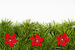 Christmas tree border with red flowers Stock Photography