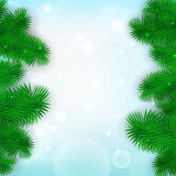 Christmas Tree Borders. Vector realistic illustration for your design Royalty Free Stock Images