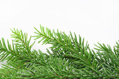 Christmas tree bough. On a white background Royalty Free Stock Image