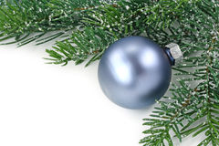 Christmas tree bough Royalty Free Stock Photography