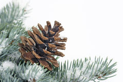 Christmas tree bough with cone Stock Photo