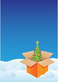 Christmas tree in box Stock Photography