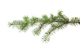Free Christmas Tree Branch Royalty Free Stock Photos - 120706168