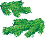 Christmas tree branch Stock Image