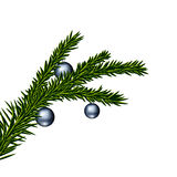 Christmas tree branch. Vector illustration of christmas tree branch with balls Royalty Free Stock Photography