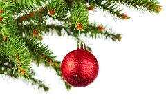 Christmas tree branch with ball Royalty Free Stock Photos