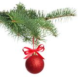 Christmas tree branch with ball stock photography