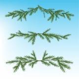 Christmas tree branch Stock Image