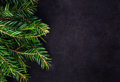 Christmas Tree Branch on Blackboard with copy space for greeting Royalty Free Stock Photo