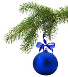 Christmas tree branch with blue ball isolated on the white backg Stock Images