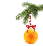 Christmas tree branch with Christmas ball in shape of orange iso Stock Images