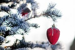 Christmas tree branch with Christmas ball in shape of strawberry Royalty Free Stock Photos
