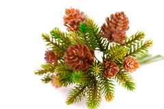 Christmas tree branch Stock Photo