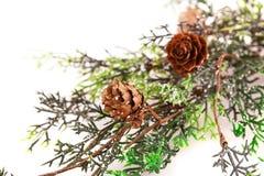 Christmas tree branch Stock Photography