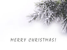 Christmas tree branch covered snow Stock Photos