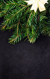 Christmas Tree Branch with festive golden ribbon on Blackboard w Royalty Free Stock Images