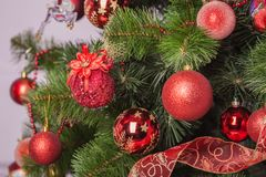 Christmas tree branch with a gift Royalty Free Stock Photo