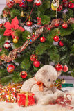 Christmas tree branch with a gift Stock Images
