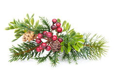 Christmas tree branch with holly decor Stock Photos