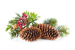 Christmas tree branch with holly decor Royalty Free Stock Images