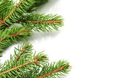 Christmas tree branch Royalty Free Stock Photos