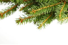 Christmas tree branch Stock Photo