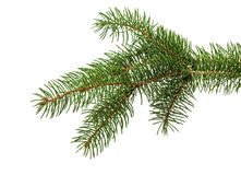 Christmas tree branch isolated on the white background Stock Photos