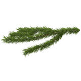 Christmas tree branch, isolated on white background Royalty Free Stock Photo