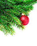 Christmas Tree Branch isolated on white background with red baub Stock Photo