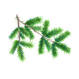 Christmas tree branch. Isolated on a white background. Watercolor illustration. Royalty Free Stock Photo