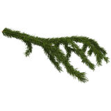 Christmas tree branch isolated on white, 3d illustration. Isolated on white background Royalty Free Stock Image