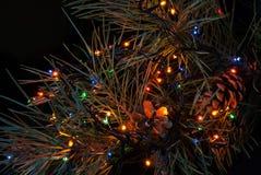 Christmas tree branch and lights stock image