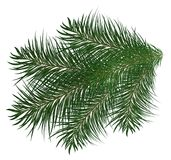 Christmas tree branch and pine trees illustration. White background Stock Photo