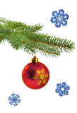 Christmas tree branch with red ball Royalty Free Stock Photography