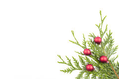 Christmas tree branch and red ball Stock Image