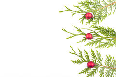 Christmas tree branch and red ball Royalty Free Stock Photo