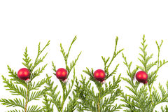 Christmas tree branch and red ball Stock Photo