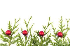 Christmas tree branch and red ball Stock Photos