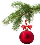 Christmas tree branch with red ball isolated on the white backgr Stock Photo