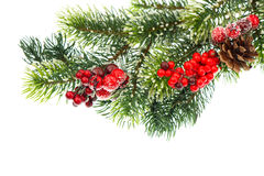 Christmas tree branch with red berries royalty free stock image