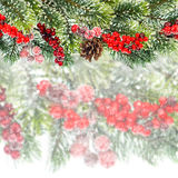 Christmas tree branch with red berrries Royalty Free Stock Photography