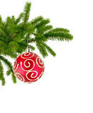 Christmas tree branch with red decorate ball isolated on white Royalty Free Stock Image
